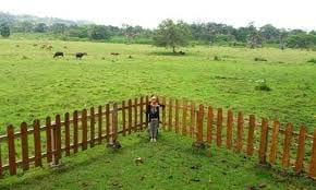 Padang Savana Sadengan